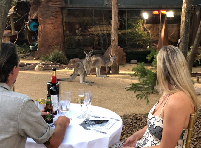 Wild-life-zoo-function-rooms-sydney-venues-darling-harbour-venue-hire-outdoor-party-room-birthday-corporate-event-office-animals-fun-011