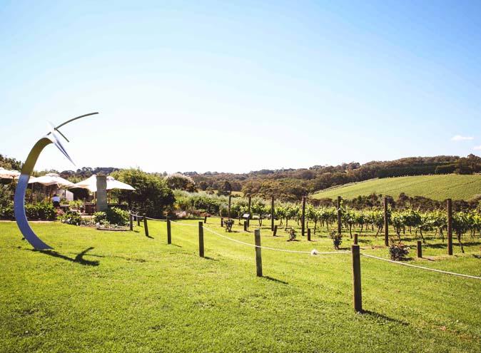 Montalto winery mornington penisula best wineries