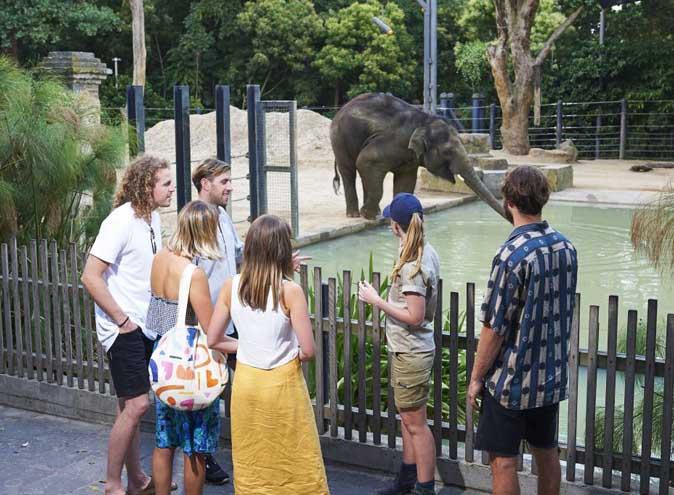 Zoo melbourne twilights bars restaurants picnics music live food trucks 5